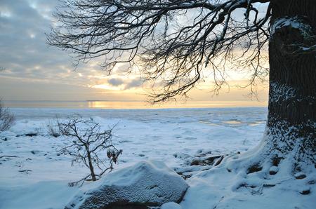 icily: Winter on bay, old oak tree at sunset