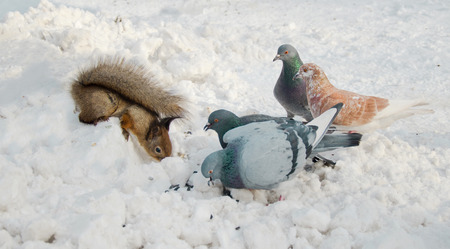 medium group of objects: meeting squirrels and birds