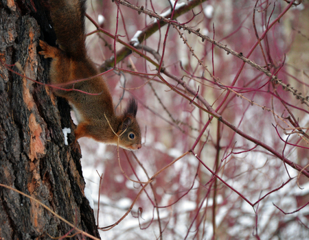 furry animals: Squirrel in wood, small furry animals on branch