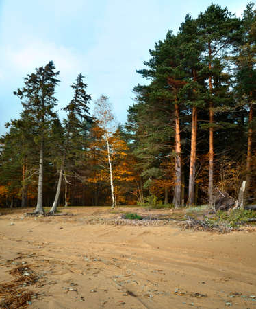 boron: autumn day in the nord forest