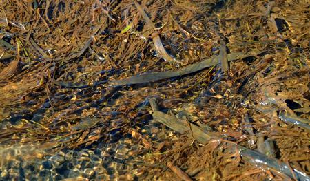 silt: silt bottom and water, bottom of forest stream Stock Photo