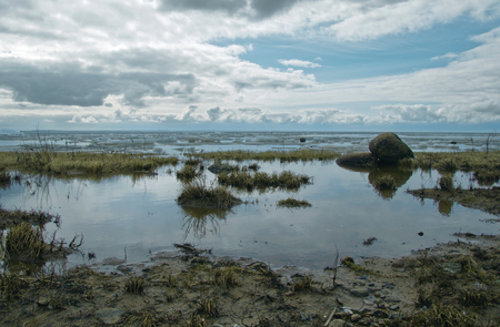 swampy: swampy shore and reflection in the water