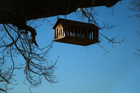 bird feeder: birdhouse on tree, bird feeder in forest