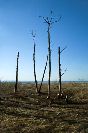 arboles secos: árboles muertos y la hierba
