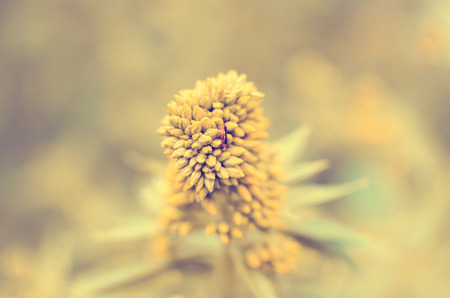 toned image: toned image of flower, summer vegetation in non-standard colors Stock Photo