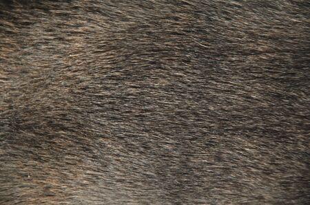 animal fur: animal fur - texture, background image of animal skins