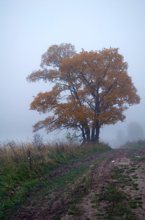 yellowed tree in the fog during the autumn leaf fall Stock fotó