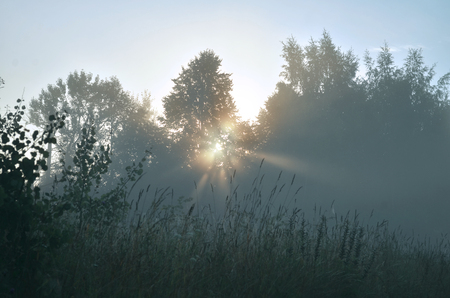 dawn and sunbeams of summer, foggy morning