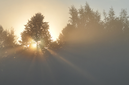 dawn and sunbeams of summer, foggy morning