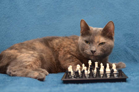 cat playing chess on a blue background