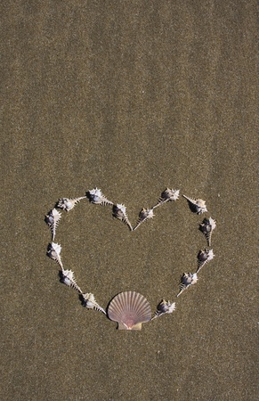murex shell: Shells laid out in a heart shape on the beach.  Copy space above and below.  More shells on the beach in my portfolio.