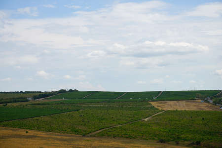 beautiful view of green vineyards, road, hills with trees and blue sky with clouds