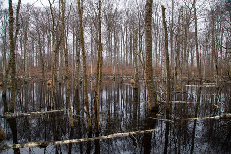 Fallen Trees in Swamp Stock Photo - 27293441