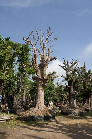 transplanting: Tree for transplanting Stock Photo