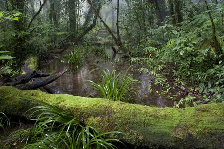 deep roots: Headwater in Tropical forest  Stock Photo