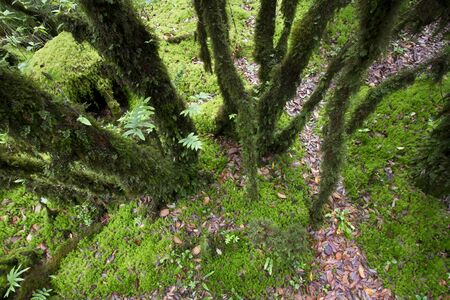 The primeval forest with mossed ground Stock Photo - 13903055