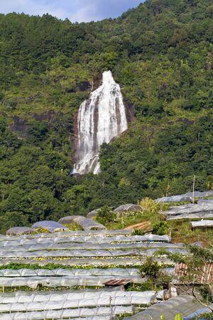 destruct: Agriculture industrial destruct rainforest in thailand