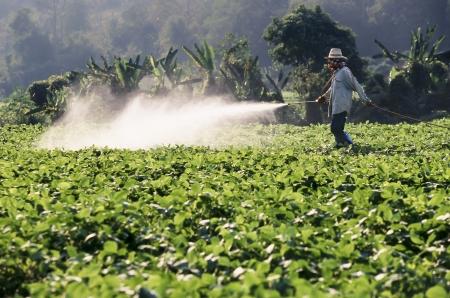 살균제: 간장 필드에 농약을 살포하는 농부 스톡 사진