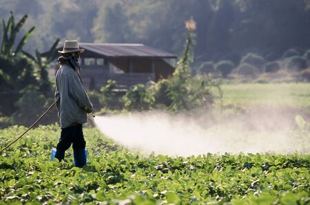 unprotected: Farmer spraying pesticide on soy field