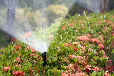 sprinkler head watering the bush and grass  photo