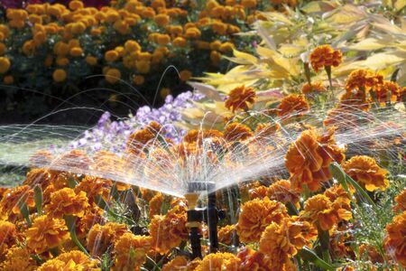 sprinkler: Mini sprinkler head watering the flowers in garden Stock Photo