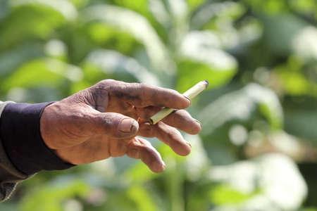 cheroot: cheroot , native cigarette in southeast asia