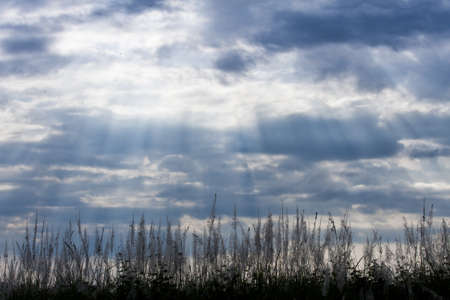 Dramatic rays of light shining through dark clouds on field  photo