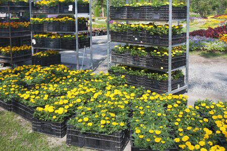 industrial park: Flowers and trays with new plants - preparing for planting new  Stock Photo