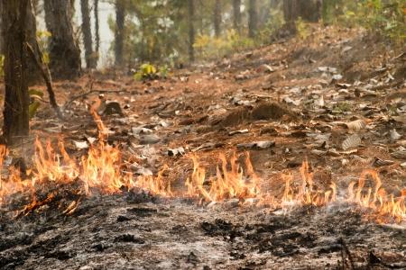 Bushfire in forest ,Thailand photo