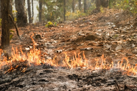smother: Bushfire in forest ,Thailand