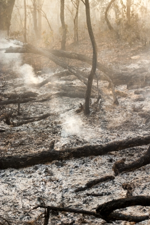 waif: Destroyed by burning tropical forest ,Thailand