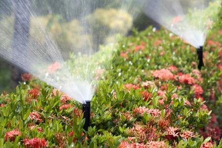 sprinkler head watering the bush and grass Banco de Imagens