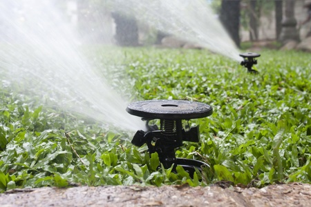 lawn sprinkler: sprinkler watering the malaysian grass  Stock Photo