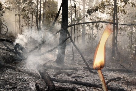 Destroyed by burning forest photo