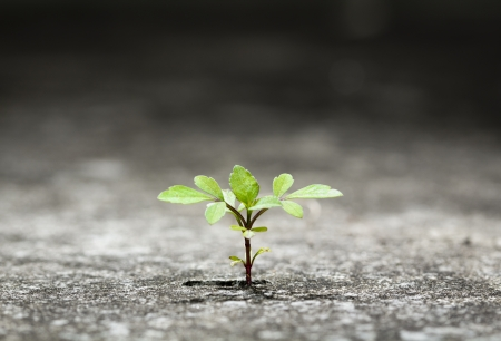 conquering: New plant germinate from the crack concrete of survival  Stock Photo