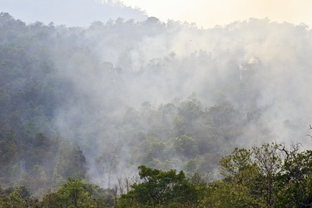 Smoke billowing forth from a large fire in a forest ,Thailand  photo