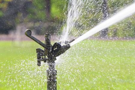 irrigate: sprinkler head watering the grass