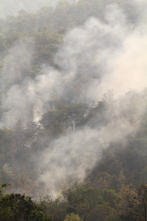 Destroyed by burning tropical forest ,Thailand photo