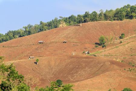 Rain forest destruction in thailand
