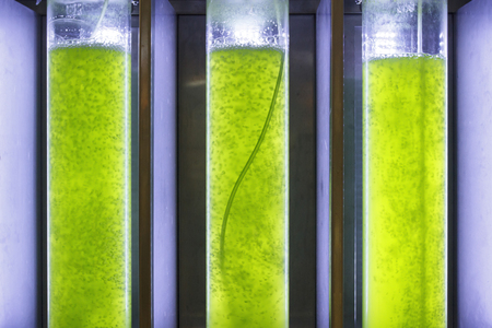 algal: Photobioreactor in Algae fuel biofuel industry  Algae fuel or algal biofuel is an alternative to fossil fuel that uses algae as its source of natural deposits
