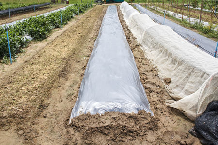 sheeting: New plastic sheeting weed barrier in vegetable garden
