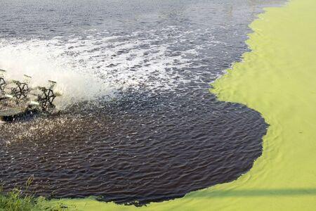 implement: Trattamento delle acque reflue Uso Lenticchia d'acqua. Questa tecnologia � economico da costruire e gestire, e facile da implementare. Archivio Fotografico