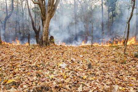 bush fire: bush in fire