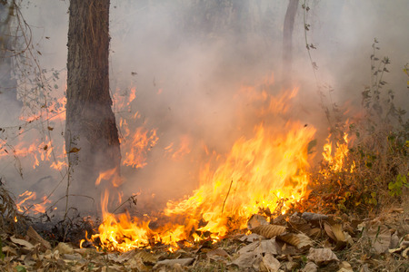 burning bush: bush fire in tropical forest Stock Photo