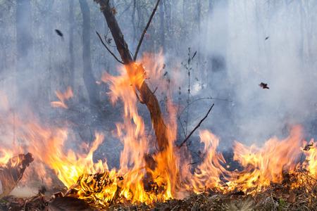 bush fire: bush fire destroy tropical forest