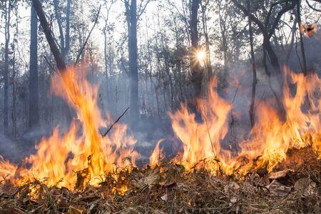 burning bush: bush fire destroy tropical forest