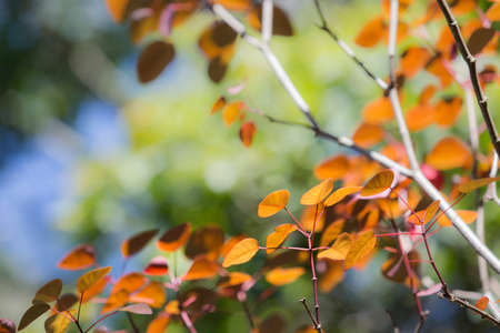 saturate: Beautifil colored leafs in autumn background Stock Photo