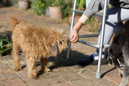persona de la tercera edad: Mujer mayor que se sienta con el caminante y alimentar a su perro viejo Foto de archivo