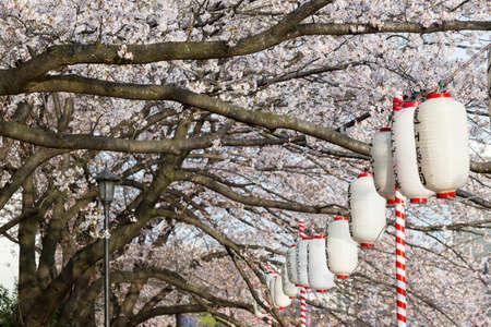 tokyo sky tree: Lanterns in Sakura Festival at walkway Ooyokogawa river , Tokyo, Japan Stock Photo