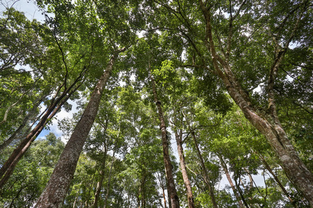 tropical forest: Tropical forest , northern Thailand